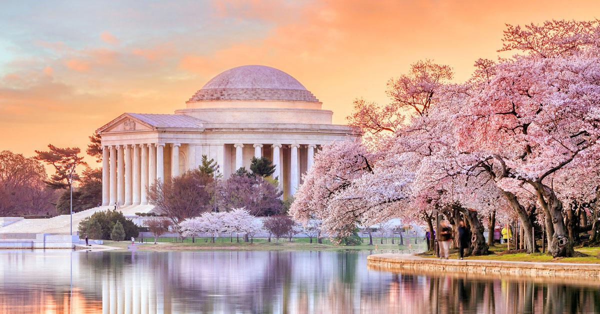 Le Festival des cerisiers en fleurs de Washington